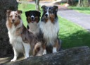 "The ""Sisters"" after a swim....Suede, Raven, and Tosca 4/09"