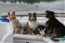 Suede, Tosca, Raven and Voodoo on Mud Lake in Wisonsin. (8/08)